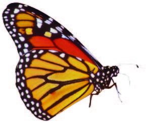 MONARCHS IN MARYLAND AND BEYOND (April 2014)