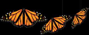 3_monarchs